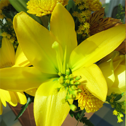 Image about yellow flower springtime | Bazilian